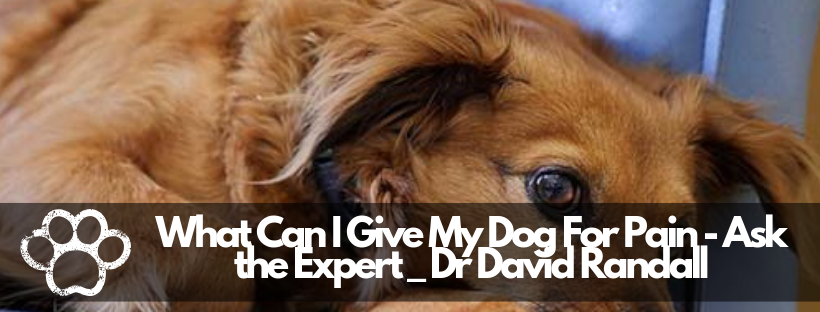 What Can I Give My Dog For Pain – Ask the Expert _ Dr David Randall