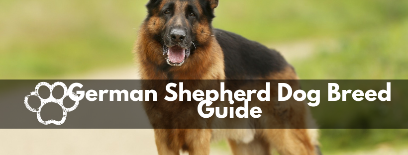 German Shepherd Dog Breed Guide