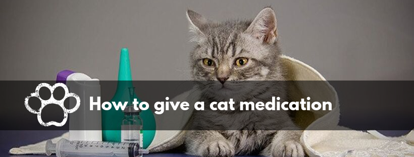 How to give a cat medication