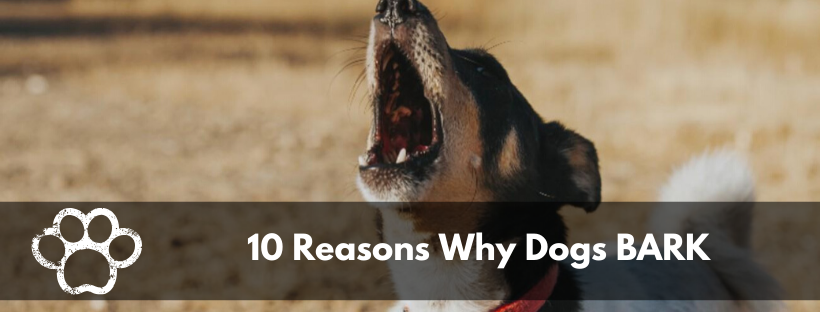 10 Reasons Why Dogs BARK