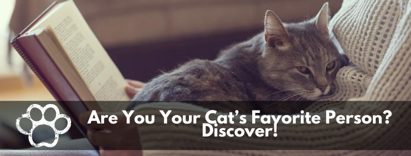 pets, cat, favorite person, discover