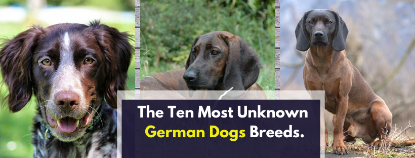 The Ten Most Unknown German Dogs Breeds.