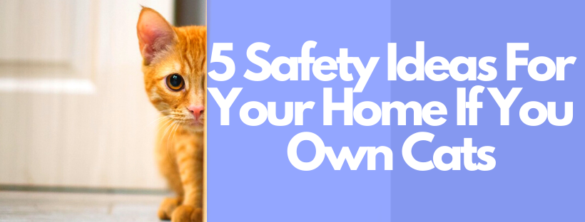 5 Safety Tips & Advice For Your Home If You Have A Cat
