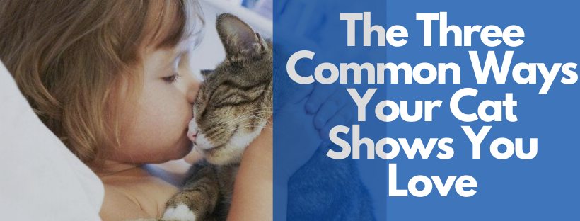 The Three Common Ways Your Cat Shows You Love