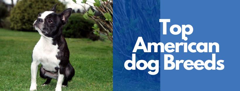 Top American dog Breeds