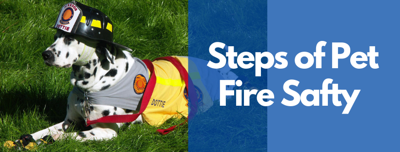 STEPS OF PET FIRE SAFETY