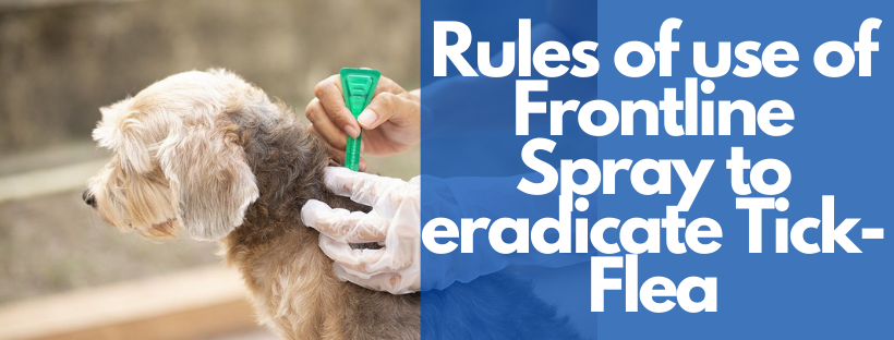 Importance and rules of use of Frontline Spray to eradicate Tick-Flea