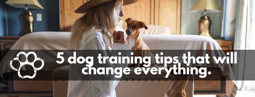 5 dog training tips that will change everything.