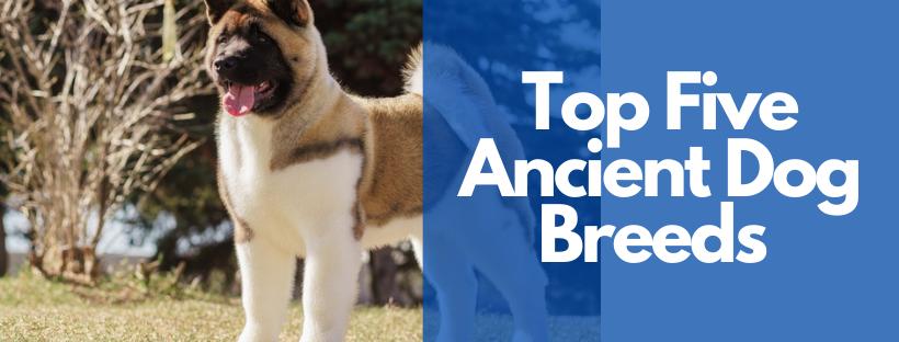 Top Five Ancient Dog Breeds