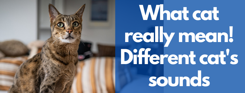What cat really mean! Different cat's sounds